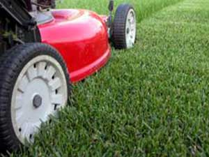 Lawn Maintenance by Newquay Garden Services
